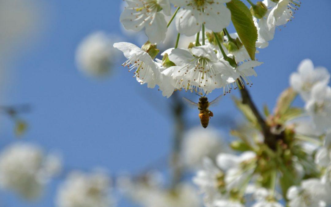 Bandito l'uso in campo aperto dei tre insetticidi più diffusi al mondo